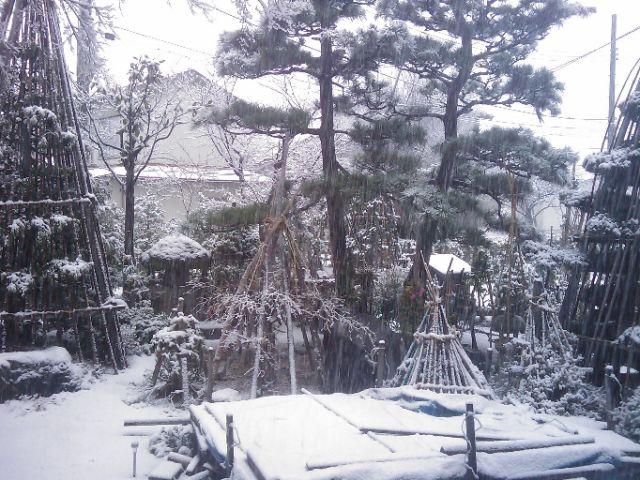 雪、ユキ。大雪。